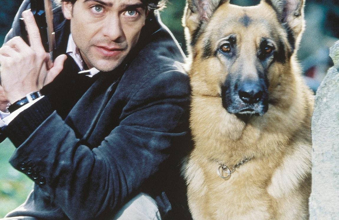 Commissario rex cane